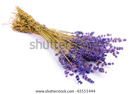 Dry bunch of French lavender - stock photo