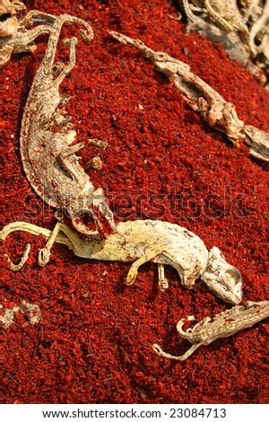 dry chameleon 01 - stock photo