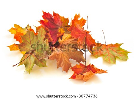 Dry colorful autumn leaves on white background - stock photo