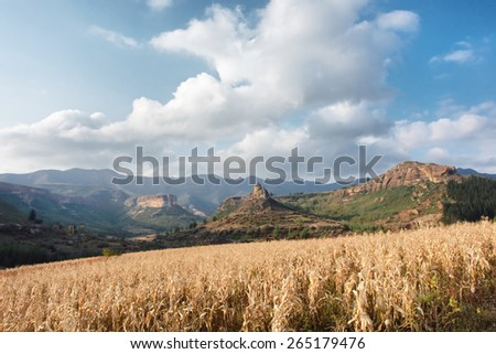 Dry corn field against mountains. Shot near Tsehlanyane Nature Reserve, Lesotho.