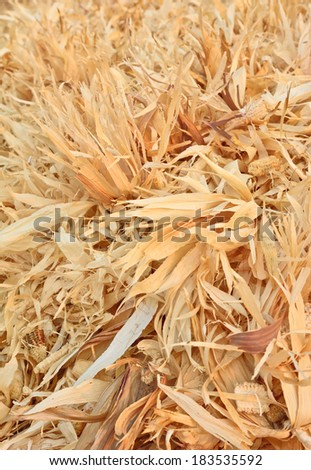 dry corncobs and corn leaves after harvesting ; maybe for background