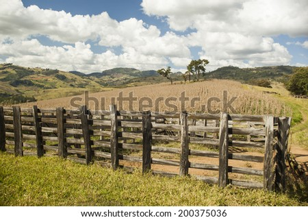 Dry cornfield under a blue sky in Brazil. - stock photo