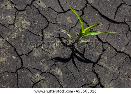 Dry cracked earth with plant struggling for life, drought - stock photo