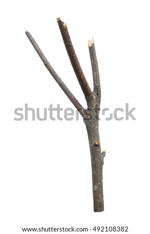 dry dead branch isolated on white background