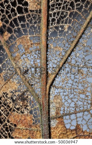 Dry Dead Leaf Close-up - stock photo