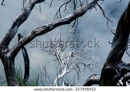 Dry dead trees in foggy mountains. Toned - stock photo