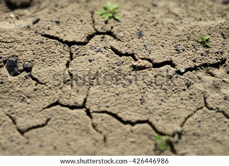Dry desert ground with green sprouts texture background