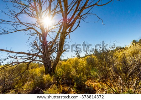 Dry died bald tree in the dry summer barren land  - stock photo