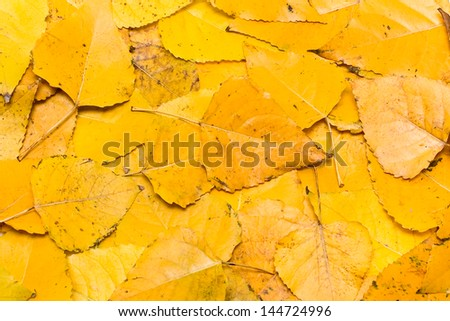 Dry fall leafs background - stock photo