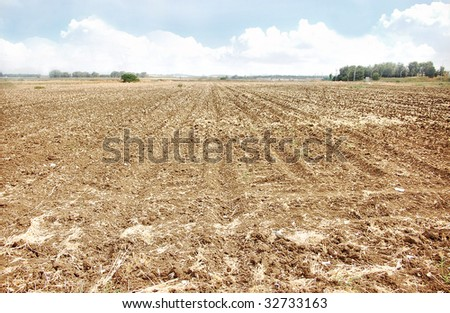 Dry fields on a summer day - stock photo