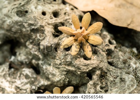 Dry flower and leave on floor in garden. - stock photo