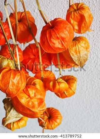 Dry flowers hanging  - stock photo