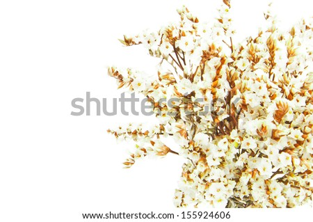 Dry flowers isolated on white - stock photo