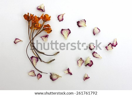 Dry flowers on white background - stock photo