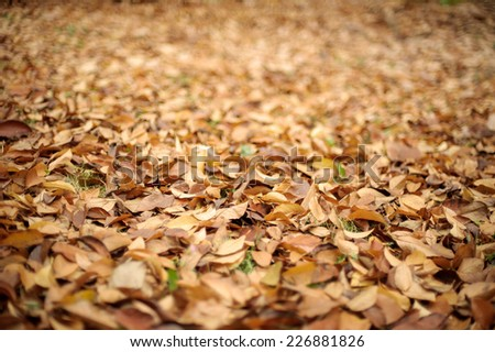 Dry golden brown leaves on the forest floor, selective focus, shallow DOF. - stock photo