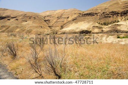 Dry grass and bush in the eastern Oregon prairie