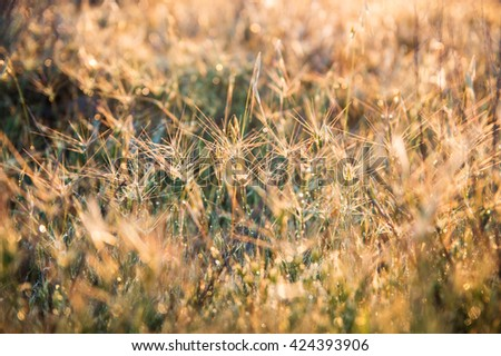 Dry grass at sunrise time - stock photo