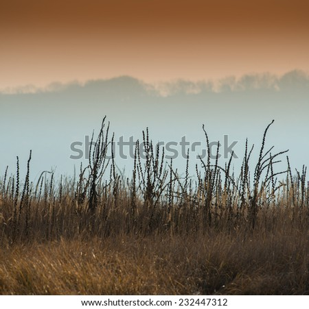 dry grass on a blurred background scenery, fall season - stock photo