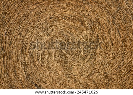 dry hay stack closeup texture - stock photo