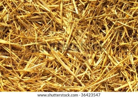 Dry hay straws background - stock photo
