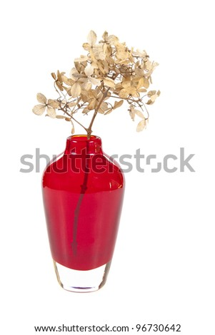 Dry hydrangea in red vase isolated on white