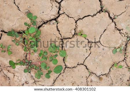 Dry land. Cracked ground background,Drought land