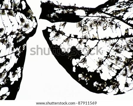 dry leaf - stock photo