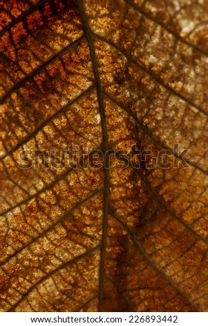 dry leaf closeup textured - stock photo