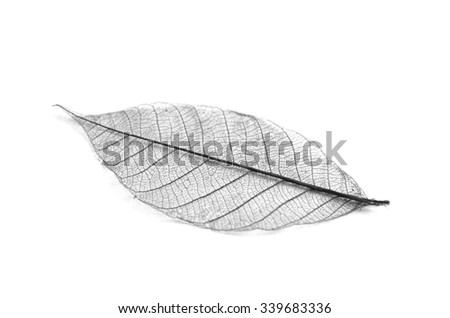 Dry leaf detail texture in front to light-dry leaves - stock photo