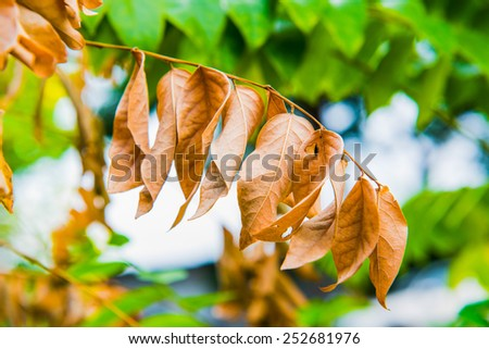 Dry leaf in park, Thailand - stock photo