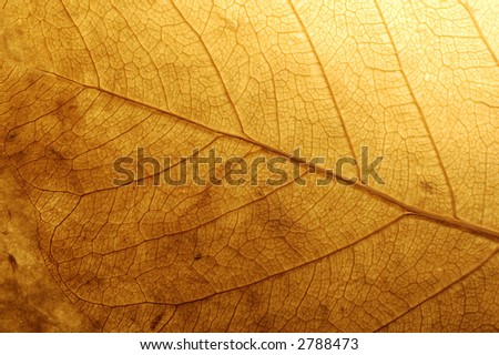 dry leaf on textured paper - stock photo