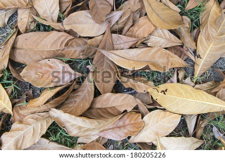 Dry leaf texture - stock photo