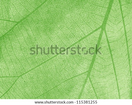 Dry leaf textured on grunge paper background