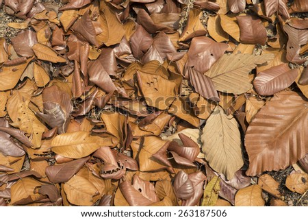 Dry leave background