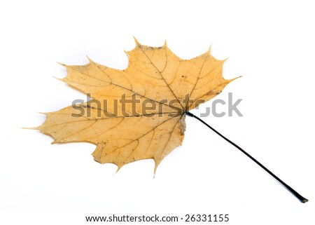 dry leave on a white background