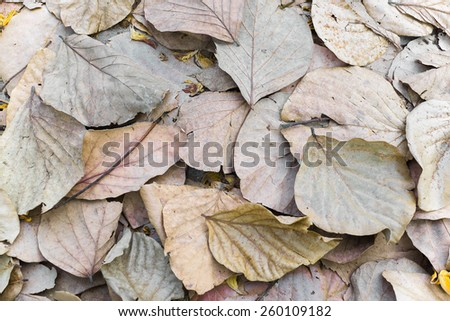 Dry leaves. - stock photo