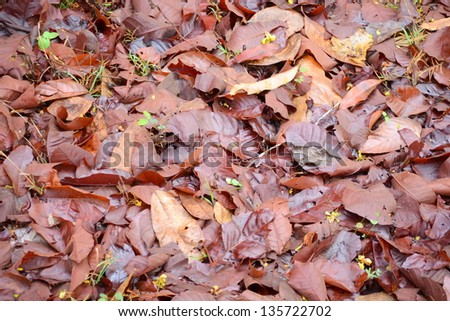 dry leaves and seedling lying on the ground