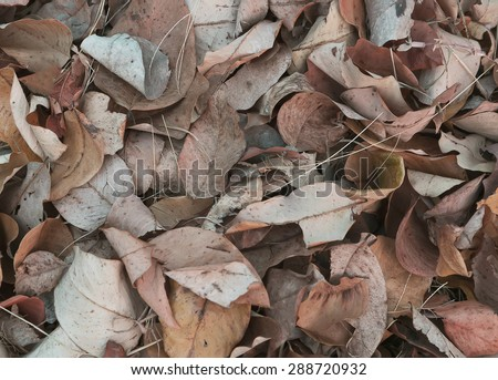 Dry leaves background photo