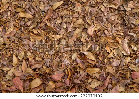 dry leaves for background and texture