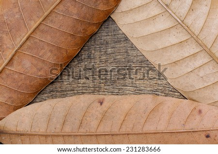 Dry leaves forming a triangle in the background of the old cracked wood