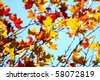 Dry leaves in autumn - stock photo