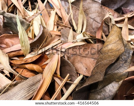 dry leaves in autumn background art - stock photo