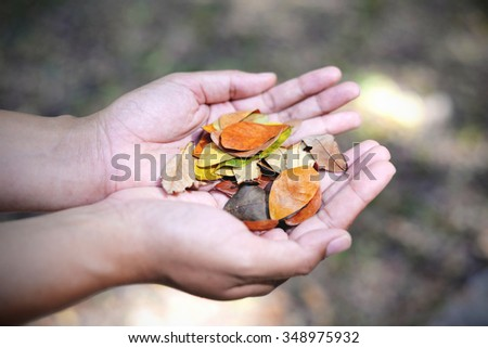 Dry leaves in hand. Nature green bokeh