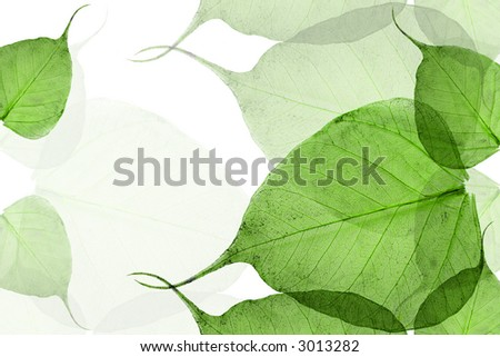 Dry leaves isolation for design works - stock photo