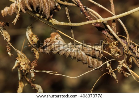Dry leaves, leaves, nature. - stock photo