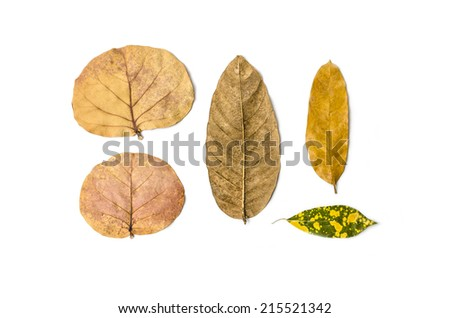 Dry leaves of tropical plants