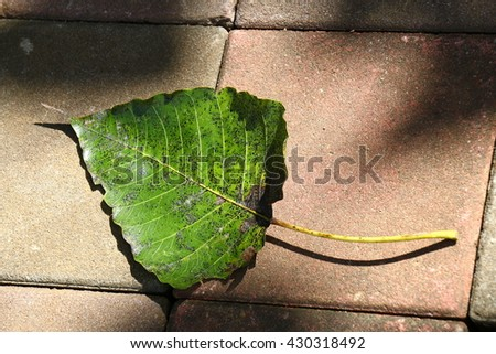 Dry leaves on cobblestone pavement made of granite cubes - stock photo