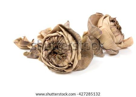 Dry lotus, Withered flower isolated on white background