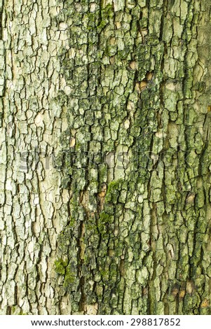 Dry old freen cracked tree bark texture closeup - stock photo