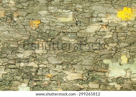 Dry old green tree bark texture closeup - stock photo